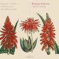 Arias y Cantatas (Barbara Strozzi)